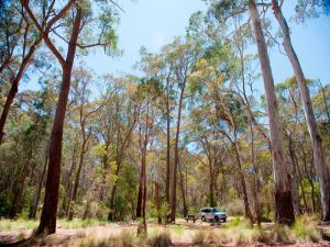 Coolah Tops National Park Camping - Accommodation NSW