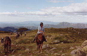 High Country Horses - Accommodation NSW