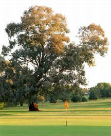 Cowra Golf Club - Accommodation NSW