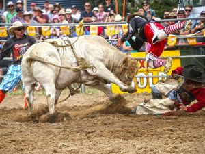 Jindabyne's Man From Snowy River Rodeo - Accommodation NSW