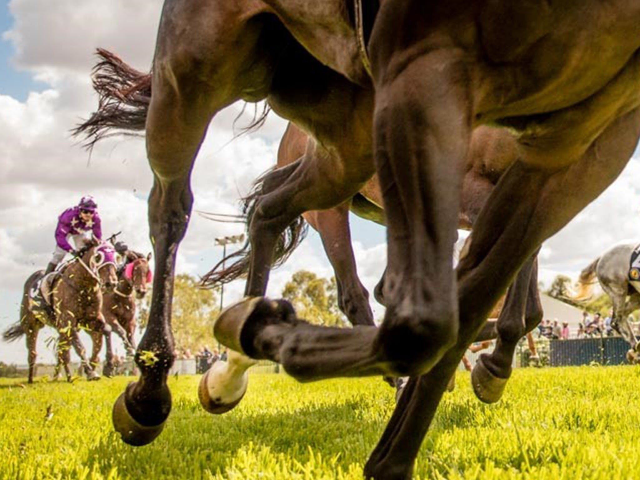 Night Markets and Race Day - Accommodation NSW