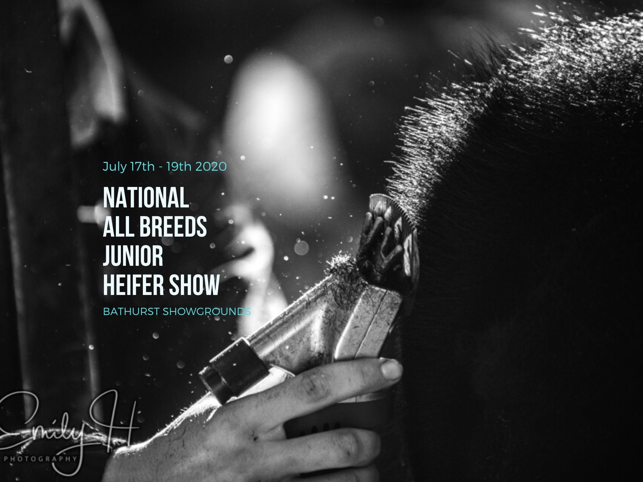 National All Breeds Junior Heifer Show - Accommodation NSW