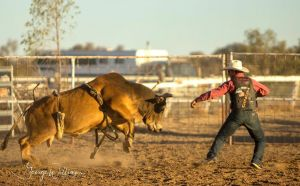 Walgett Charity Bushman's Carnival Rodeo and Campdraft - Accommodation NSW