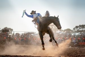Rodeo by the Sea - Streaky Bay - Accommodation NSW