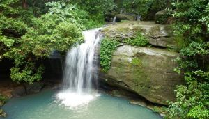 Buderim Forest Hideaway - Accommodation NSW