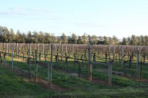 Milawa Vineyard Views - Guesthouse 2 - Accommodation NSW